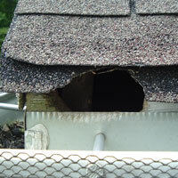 Get Rid Of Squirrels Out Of The Attic Georgia Squirrel